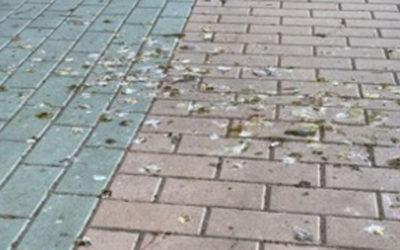 Tercera Edad en Acción pide al Ayuntamiento de Zamora que tome medidas sobre la suciedad provocada por las aves en la ciudad
